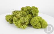 JORD-62A - Mousse d'islande 100 g Vert clair