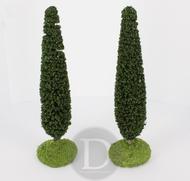 2 Cyprès de provence miniature 14 cm - FR 61691