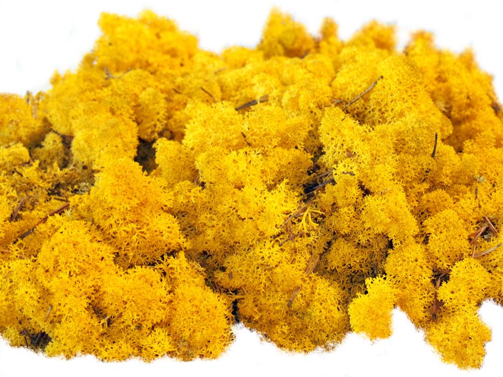 Lichen naturel stabilisé - jaune
