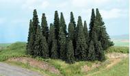 Végétation miniature - Forêt de 24 sapins 5 à 11 cm - Heki 2261