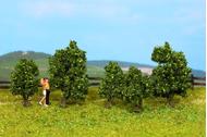 5 Arbustes verts 1:87, 1:120 - 3 à 4 cm