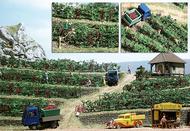 Busch 1200 - Vignes miniatures 1:87 - HO