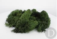 JORD-63 - Mousse d'islande 40 g Vert foncé