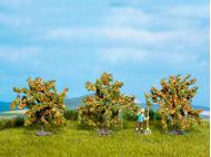 Noch 25114 - Orangers 4 cm