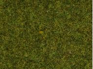 Végétation miniature : Herbes pré - Noch 8152