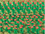 Végétation miniature : 120 Asters rouges - 1:87, HO - Vollmer 05116