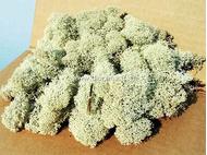 Heki 3233 - Lichen gris - mousse d'Islande - 250 g