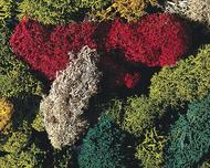 Végétation miniature : Lichens trié couleurs différentes - 80 g - 1:87 H0 - Faller 170730