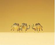 Preiser 79711 - Chameaux miniatures 1:160