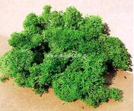 Heki 3210 - Lichen vert clair - mousse d'Islande - 30 g