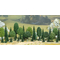 Végétation miniature : Bois mélangé - Busch 06590 6590