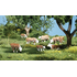 Vaches 1:43 - Woodland A2767