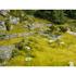 Végétation miniature : Prairie inondable Natur+ - Noch 07471