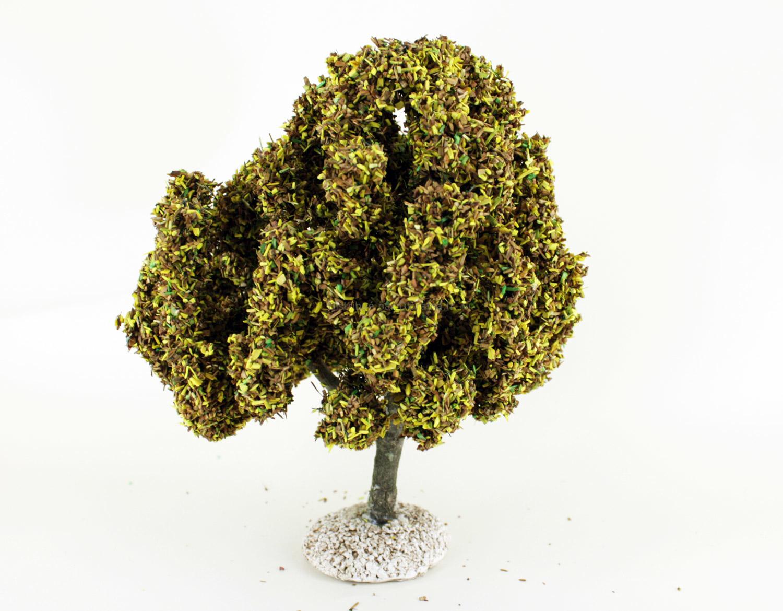 Platane automne - arbre miniature naturel 18 cm - FR