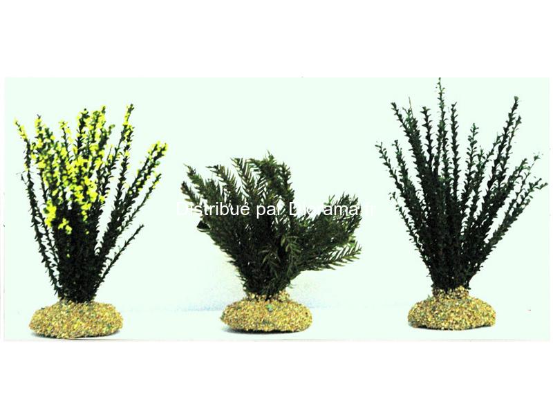 2 plantes vertes 6cm et  1 genet 4 cm