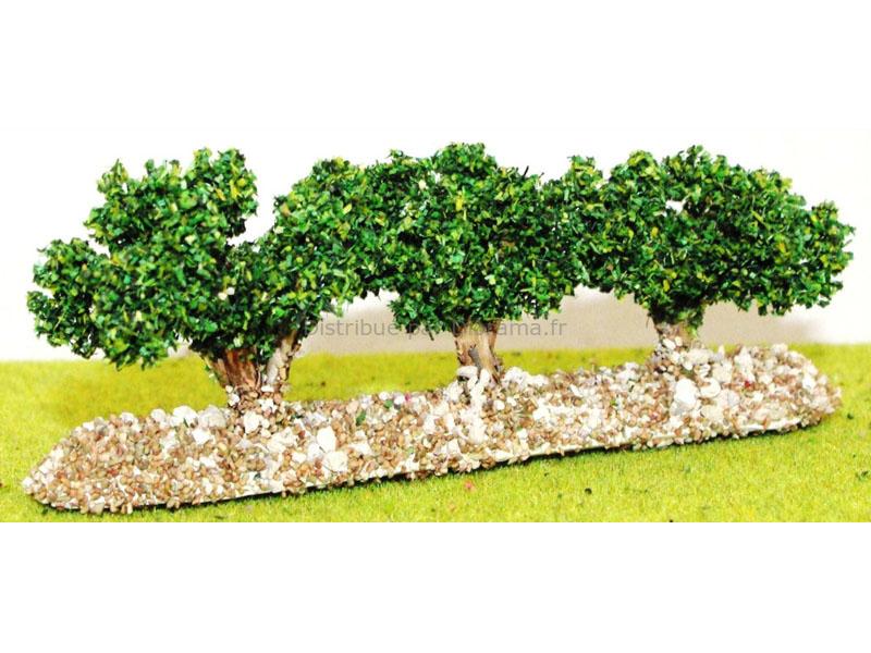 3 rangées de vignes vertes